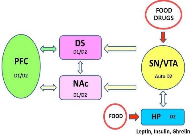 "Baik, Ja-Hyun. ""Dopamine Signaling in Food Addiction: Role of Dopamine D2 Receptors."" BMB Reports 46.11 (2013): 519–526. PMC. Web. 7 Aug. 2015."