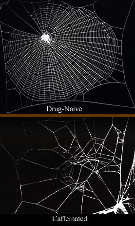 https://thepaleodiet-assets.s3.amazonaws.com/images/Caffeinated_spiderwebs.jpg?mtime=20200115114711&focal=none
