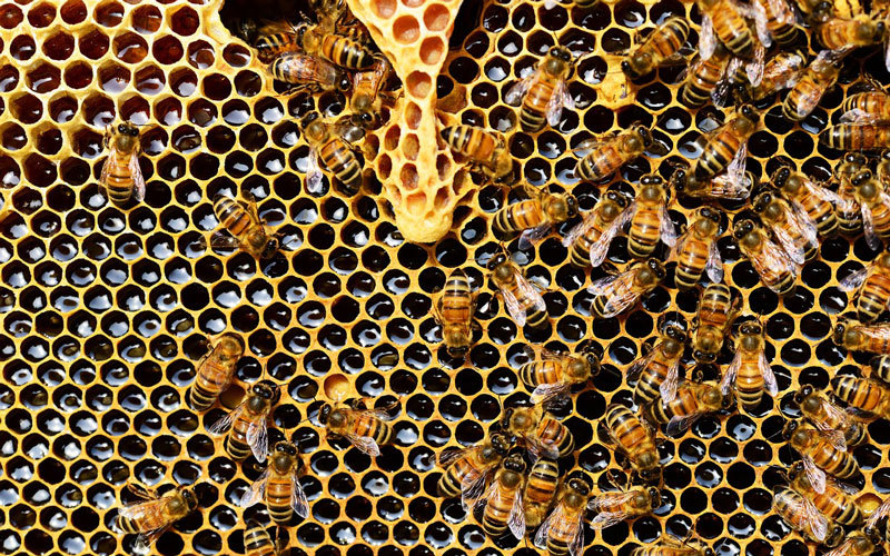 Honey: The Sticky Truth
