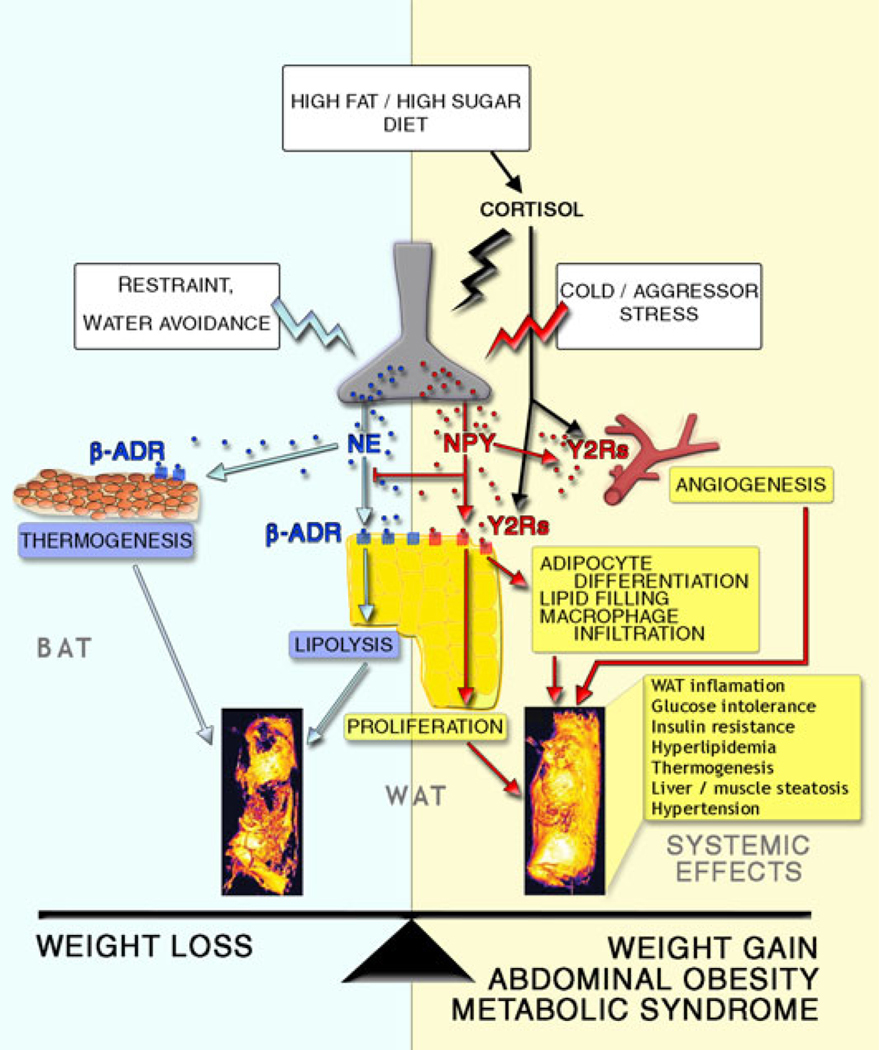 Endocrinology: Dietary Intake and Hormones