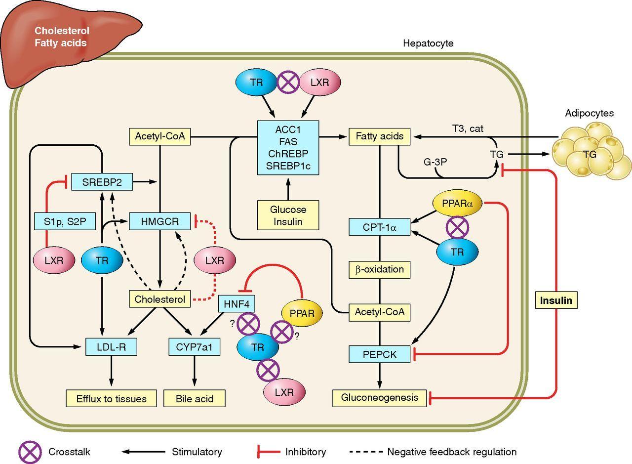4 Paleo Cornerstones to Increase Your Metabolism