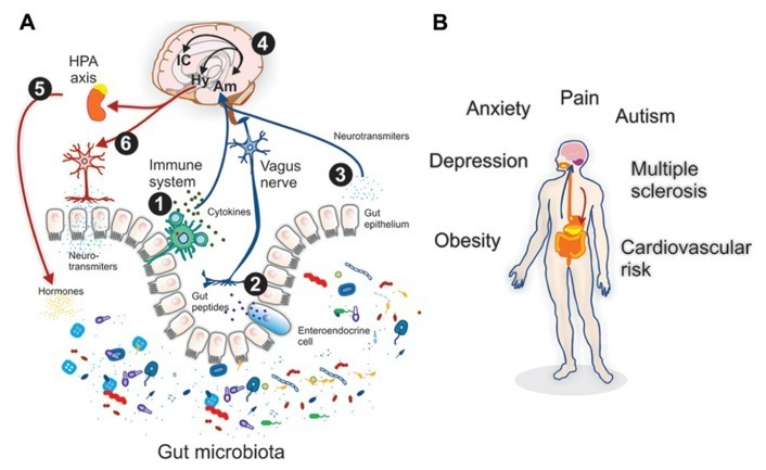 Eating Disorders, Mental Health, and the Gut Microbiome image