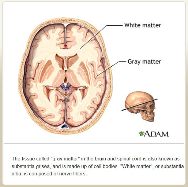 Gluten and The Brain image