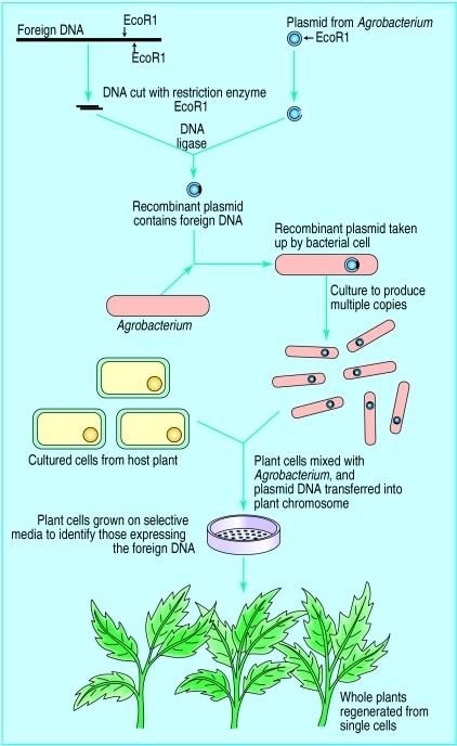 GMO Fig 2 | The Paleo Diet