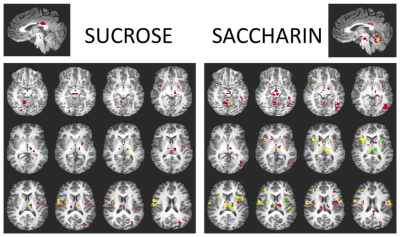 Neurobiology of Sugar Cravings |The Paleo Diet