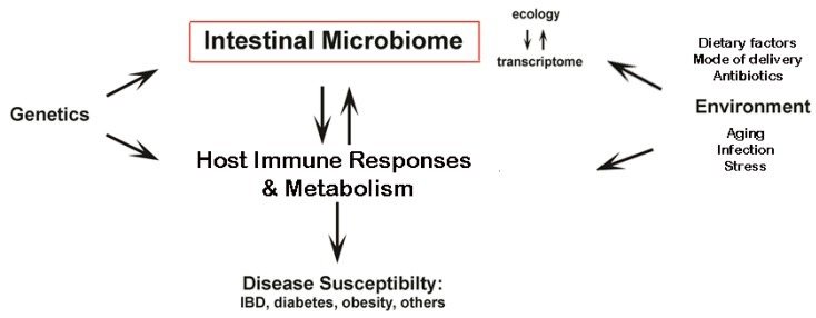 "Brown, Kirsty et al. ""Diet-Induced Dysbiosis of the Intestinal Microbiota and the Effects on Immunity and Disease."" Nutrients 4.8 (2012): 1095–1119. PMC. Web. 31 Mar. 2015."