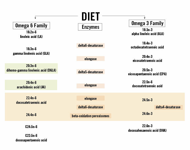 Polyunsaturated Fatty Acids The Paleo Diet
